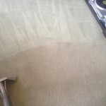 Carpet-Cleaning-Union-City