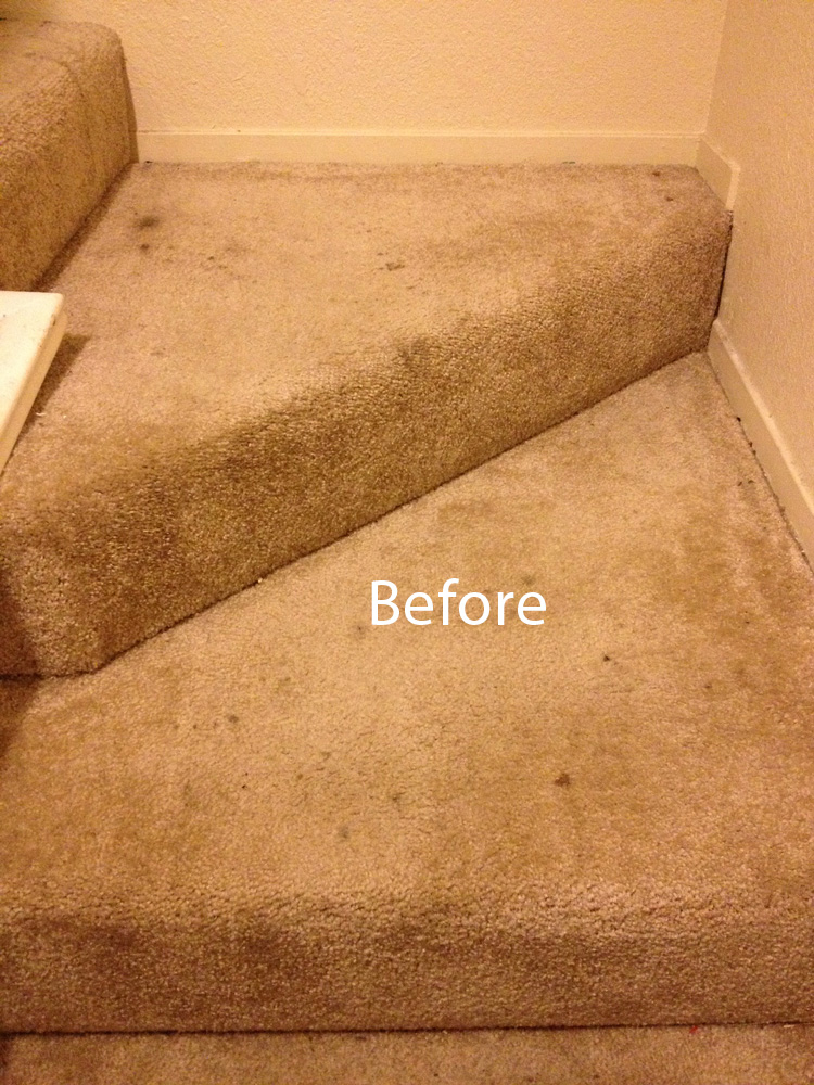 Best Rug Shampooer For Stairs Designs