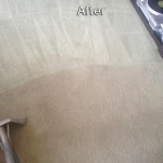 Union-City-Carpet-Cleaning-Company