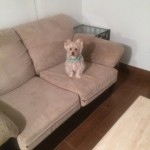 Union-City-Sofa-Pet-Stain-Cleaning